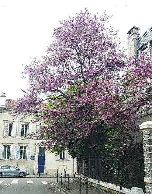 Ville de Nancy - Angle des rues Emile Gallé et Victor Prouvé