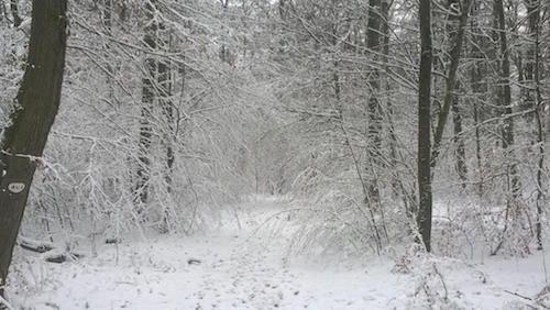 Ville de Nancy - Forêt de Haye