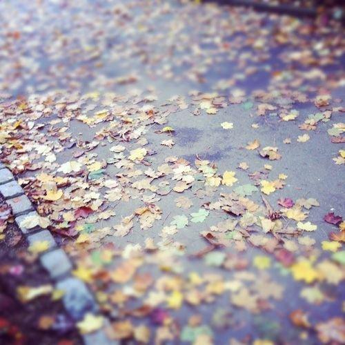 Ville de Nancy Les feuilles du Parc Saint-Marie