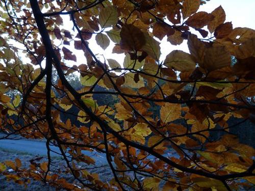 Ville de Villers-lès-Nancy - Souvenir de forêt de Haye #GrandNancy