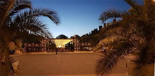 Ville de Nancy - Palmiers porte Héré