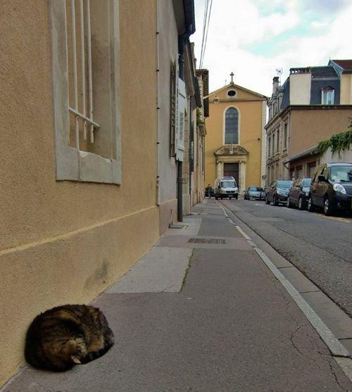 Ville de Nancy Un chat comme les autres...