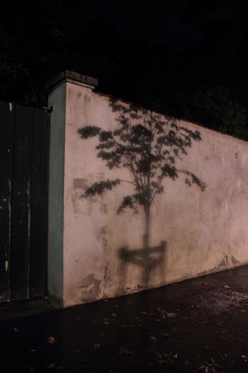 Ville de Nancy - Arbre fantôme