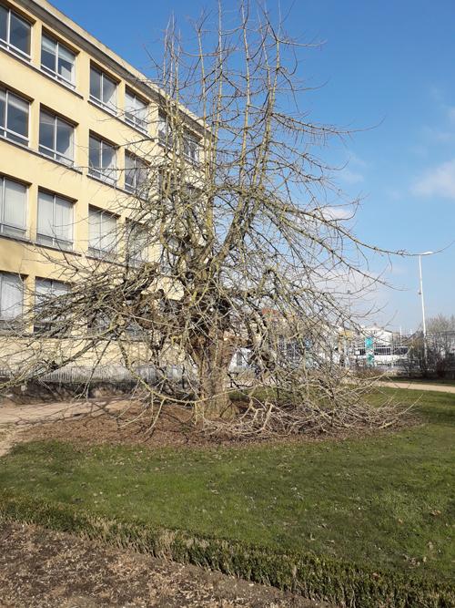 Ville de Nancy - Jardin Godron en février