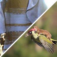 Une robe et une belette