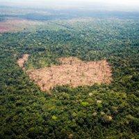 La forêt équatorienne reprend des couleurs