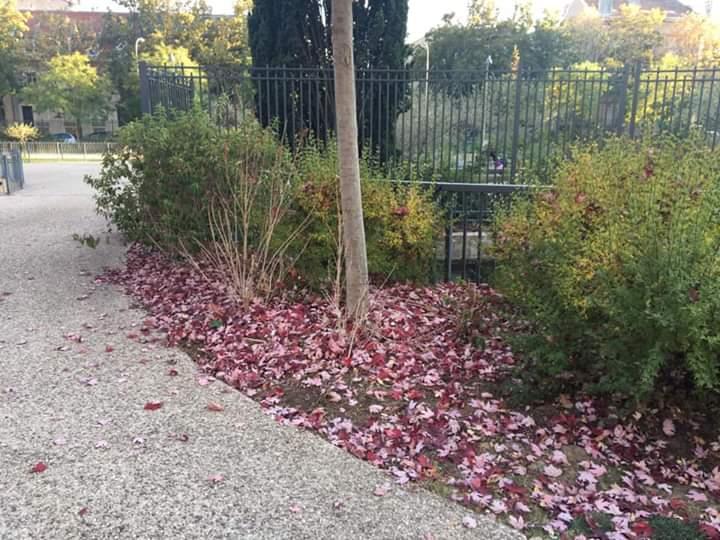 Ville de Nancy - Couleurs d'automne place des Ducs-de-Bar