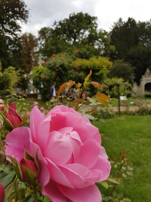 Ville de Nancy -  Fleur à la Pépinière