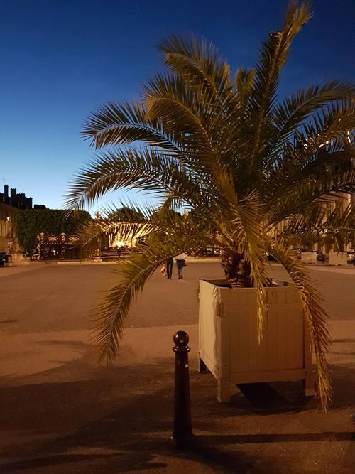 Ville de Nancy - La porte Héré face au palmier