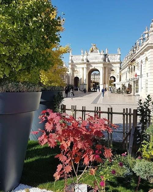 Ville de  Nancy - Jardin ephémère 2018 - Japonica