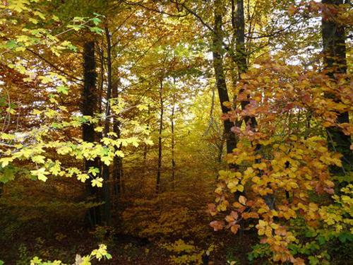 Ville de Nancy - Forêt de Haye en Automne