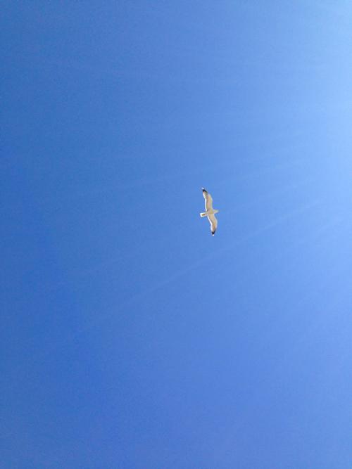 Ville de Nancy - Oiseau survolant la gare