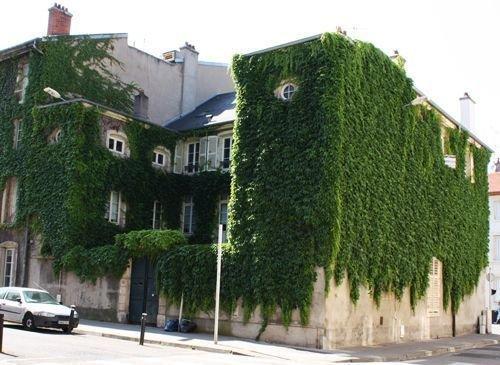Ville de Nancy - L'invasion de la vigne vierge